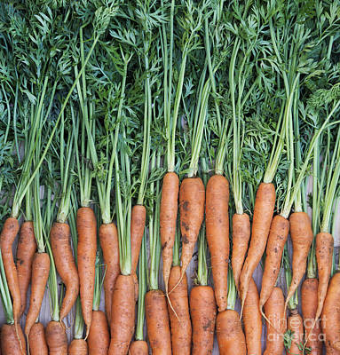 Carrot Photograph - Carrots by Tim Gainey