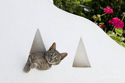 Gray Tabby Photograph - Cat In A Wall by Jean-Louis Klein & Marie-Luce Hubert