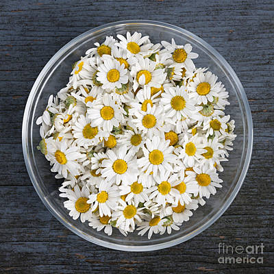 Chamomile Flowers In Bowl Print by Elena Elisseeva