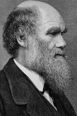 Lapel Drawing - Charles Darwin by English School