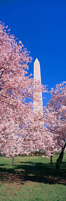 Cherry Blossoms And Washington Print by Panoramic Images