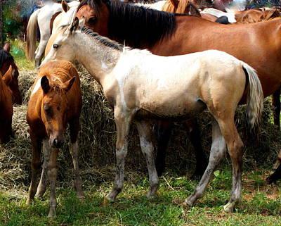 Horse Photograph - Chincoteague Horses Pony Swim 2015 by Katy Hawk
