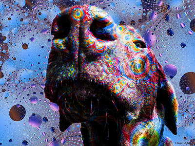 Chocolate Labrador Retriever Digital Art - Chocolate Lab Nose by Roger Wedegis