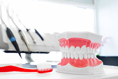 Accessory Photograph - Clean Teeth Denture, Dental Jaw Model And Toothbrush In Dentist's Office by Michal Bednarek