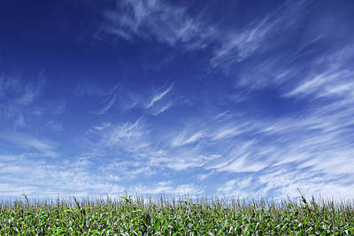Clouds Over Cornfield Print by Donald  Erickson