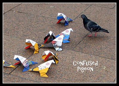Bird Photograph - Confused Pigeon by Carla Parris