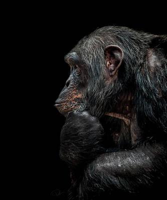 Primate Photograph - Contemplation  by Paul Neville