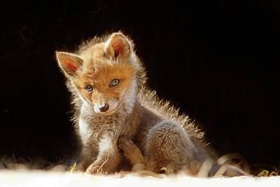 Kit Photograph - Cute Baby Fox by Roeselien Raimond