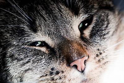 Eye Photograph - Cute Cat Close-up Portrait by Michal Bednarek