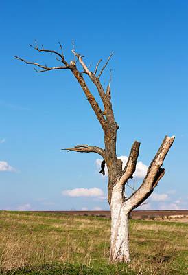 Dead Tree Print by Boyan Dimitrov