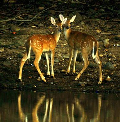 Deer Family Original by Aron Chervin