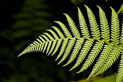 Fern Photograph - Detail Of Asian Rain Forest Ferns by Tim Laman