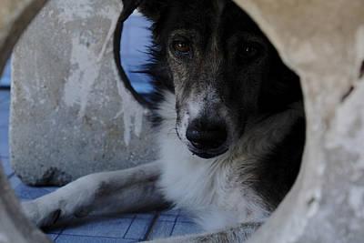 Street Photograph - Dog by Joseph Thiery