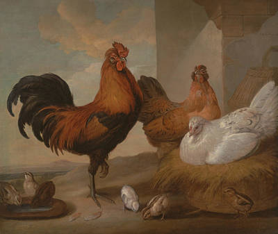 Francis Barlow Painting - Domestic Cock Hens And Chicks by Francis Barlow