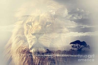 Lion Photograph - Double Exposure Of Lion And Mount Kilimanjaro Savanna Landscape by Michal Bednarek