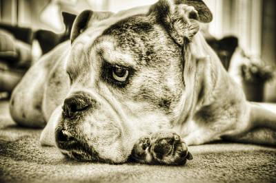Bulldogs Photograph - Dozer by Andrew Kubica