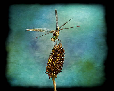 Dragon Fly Print by Steven  Michael