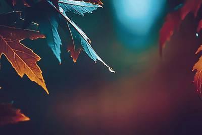 Fall Photograph - Drip by Brennan Gallegos
