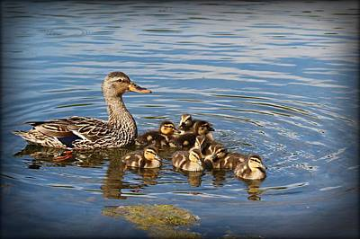 Butterfly Photograph - Duck Family by John Ohm