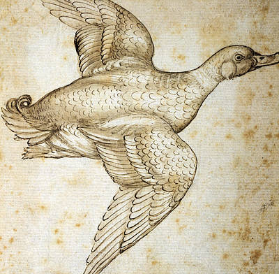 Pen And Ink Drawing Drawing - Duck by Leonardo da Vinci