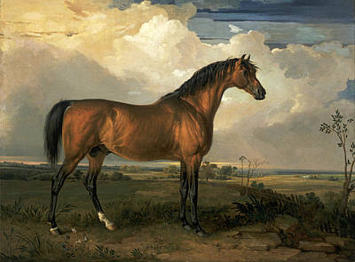 James Ward Painting - Eagle A Celebrated Stallion by James Ward