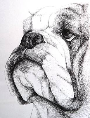 English Bulldog Drawing Drawing - English Bulldog by Nic Mogg
