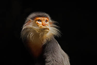 Monkey Photograph - Enlightenment by Ashley Vincent