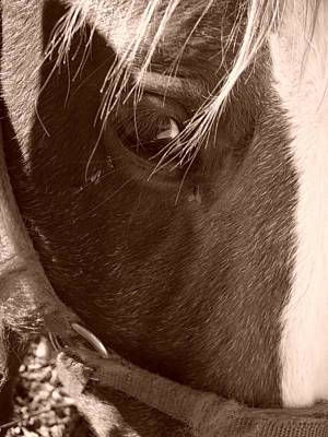 Laura Palmer Photograph - Eye by Laura Palmer