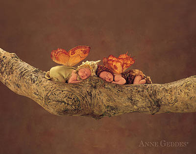 Branch Photograph - Fairies by Anne Geddes