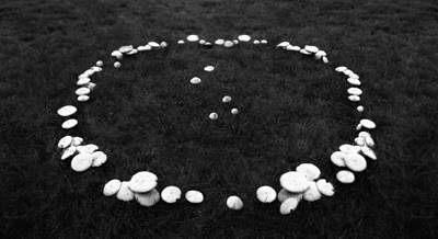 Fairy Ring Print by Mark Wagoner