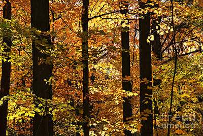 Environment Photograph - Fall Forest by Elena Elisseeva