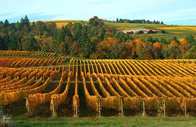 Fall In A Vineyard Print by Margaret Hood