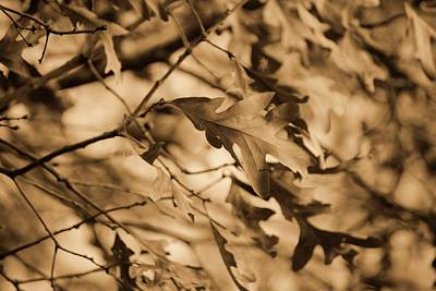Fall Print by Julian Bralley