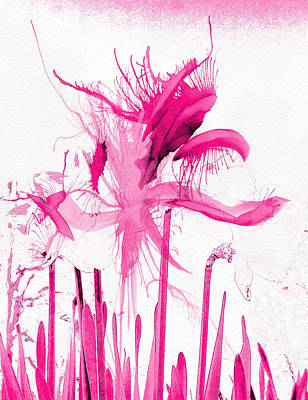 Abstract Photograph - Floral Abstract by Tom Gowanlock