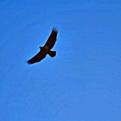 Que Photograph - Flying High by Judy Bernier