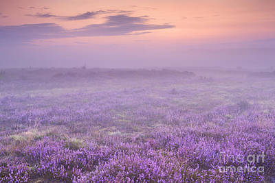 Heather Photograph - Fog Over Blooming Heather Near Hilversum, The Netherlands by Sara Winter