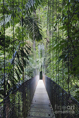 Footbridge In Costa Rican Forest Print by Jeremy Woodhouse