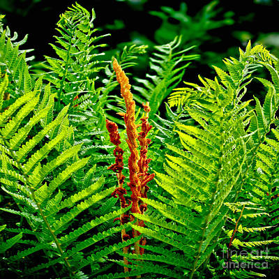Fern Fractals In Nature Print by Carol F Austin
