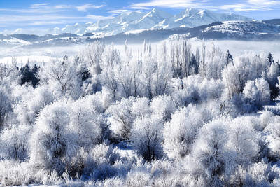 Frosted Trees In Ogden Valley Utah Print by Utah Images