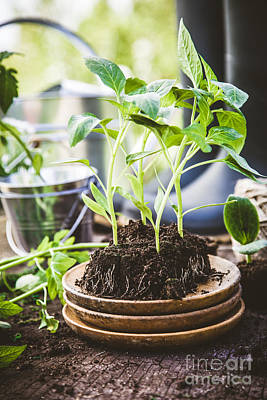 Garden Photograph - Garden by Mythja Photography