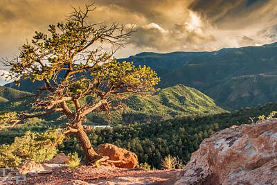 Landscape Photograph - Garden Of The Gods Trees by Chad Gilbert