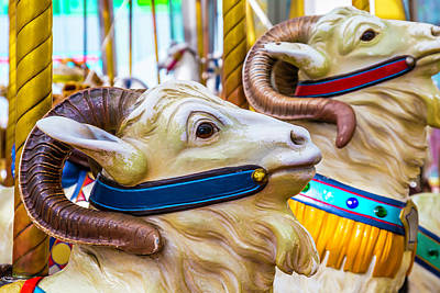 Goat Photograph - Goat Carrousel Ride by Garry Gay
