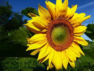 Fushia Photograph - Good Morning Sunshine by Tina M Wenger