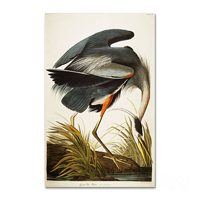 Yellow Beak Painting - Great Blue Heron by Celestial Images