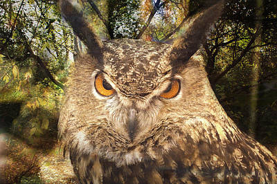 Great Horned Owl 3 Print by Marty Koch