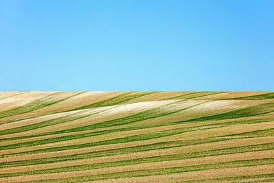 Green Stripes Print by Todd Klassy