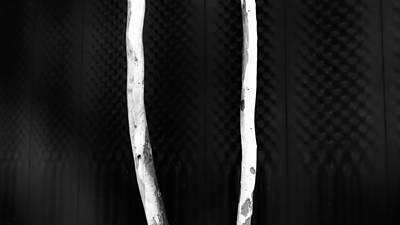 Gum Tree - Canberra - Australia Print by Steven Ralser