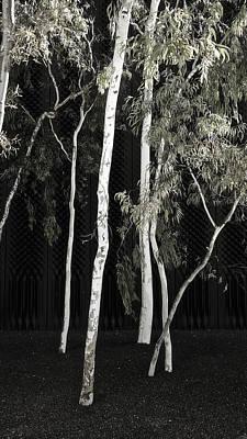 Gum Trees - Canberra - Australia Print by Steven Ralser