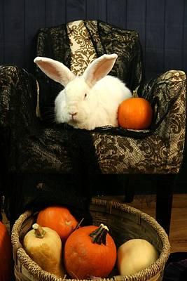Photograph - Halloween Rabbit by Amanda Stadther