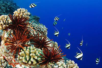 Hawaiian Reef Scene Print by Dave Fleetham - Printscapes
